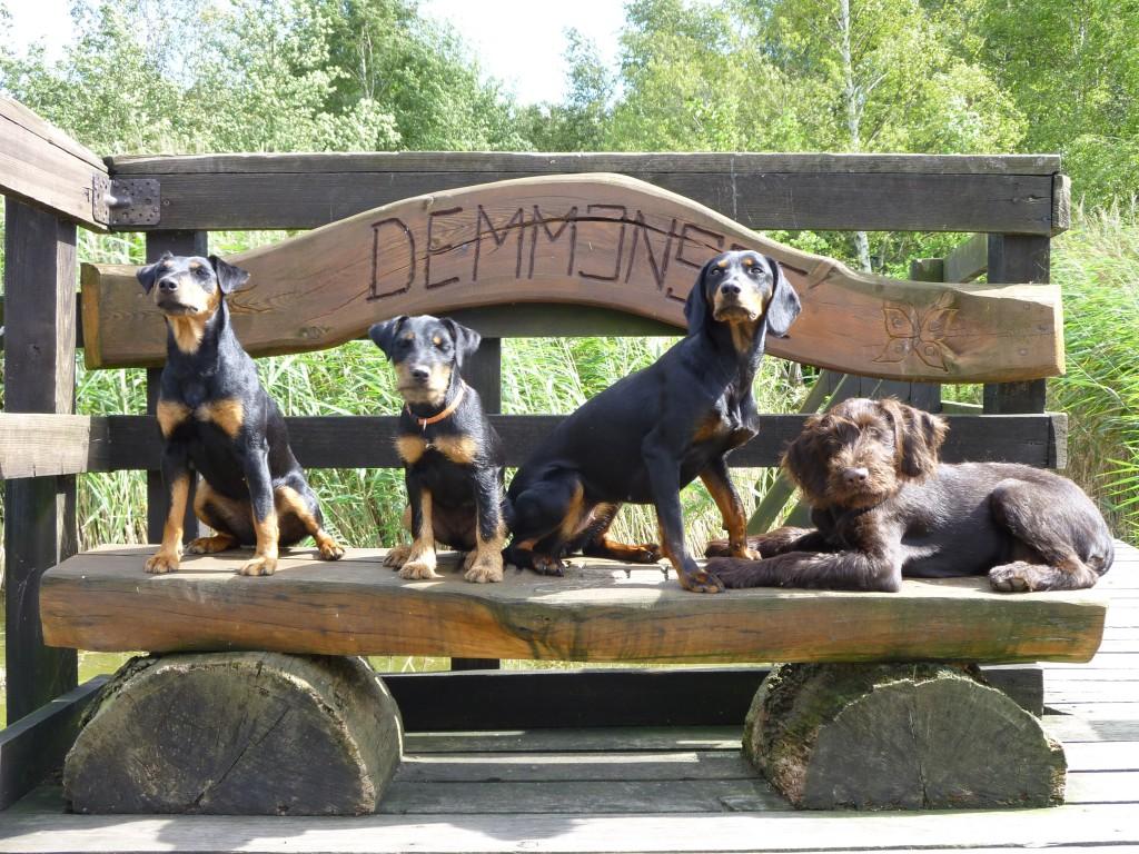Hunde vom Teuberschlag